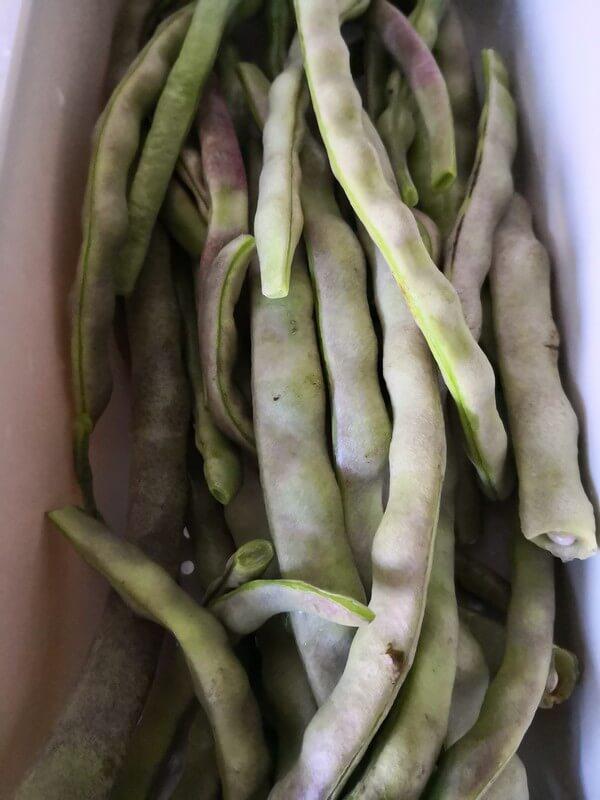 Prepare beans to wash
